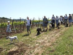 Sit and stay at these dog-friendly wineries!