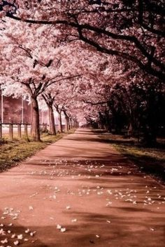 70 Best Stickers Images Nature Cherry Tree Beautiful Flowers