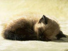 Sleepyyy