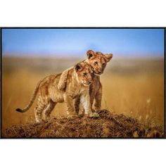 """Global Gallery 'Brothers for Life' by Jeffrey C. Sink Framed Photographic Print Size: 24.1"""" H x 36"""" W x 1.5"""" D"""