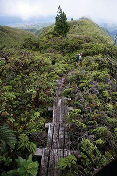 Pu'u Kukui Watershed Preserve Hawaiian Plants, Maui Hawaii, Preserve, Roots, Mystery, March, Magazine, Chow Chow, Magazines