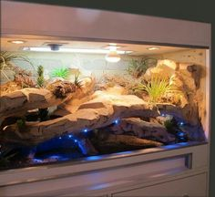 Newest Photos Reptile Terrarium leopards Thoughts There is no doubt that will possessing a family pet would bring untold enjoyment to help someone's life. Newest Photos Reptile Terrarium leopards Thoughts Amelie Reptile Habitat, Reptile Room, Reptile Cage, Reptile Enclosure, Reptile Tanks, Reptile Pets, Reptile House, Terrariums Gecko, Leopard Gecko Terrarium
