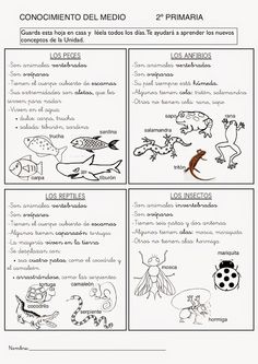 Fichas de Conocimiento del Medio (2º de Primaria) Bilingual Classroom, Spanish Classroom, Teaching Spanish, Science Lessons, Science For Kids, Science And Nature, Spanish Anchor Charts, Animal Projects, Science Classroom