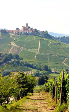 Walking Piedmont in Italy, a hike to Castiglione Falletto high on the hillside for dinner & Barolo wines. One of the best ways to get exercise and travel the world. Something of a food lovers Italy travel guide for those not afraid of just a little hard work.
