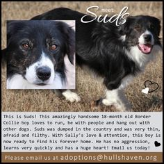 Gorgeous Suds needs a home!