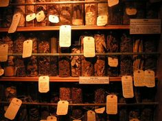 Apothecary: Common Herbs, Flowers & Spices and their Spiritual Uses & Medicinal Properties