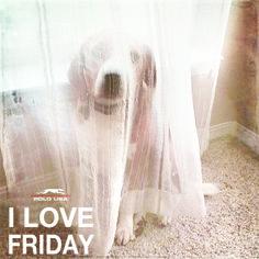 polousa.com.br Friday, Polo, Usa, My Love, My Boo, Polos, Tee Shirt, America