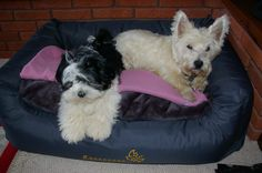 2013 - Got larger bed for them but they rarely both get in together