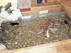 1000 images about indoor koi pond on pinterest koi for Indoor koi fish tank