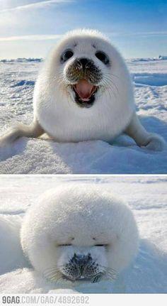 Cute Ice Ball