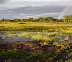 Save the wetlands, recreational open spaces campaign gathers momentum World Wetlands Day, Water Challenge, Open Spaces, Aquatic Plants, Geology, The Locals, Sustainability, Campaign, Country Roads