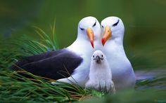 birds_family-