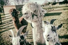 White Post Farm - meet the animals on a fun day out at one of the East Midlands' top attractions