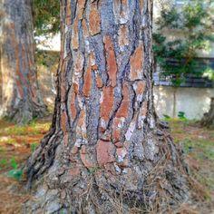 Estes eucaliptos criam uns efeitos bem interessantes.