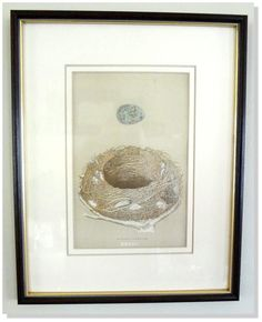 """Bird Nest Egg F.O.Morris Nests Eggs of by EarlyRiverGallery About the Archival Custom Framing:  *Framed in a 1/2"""" walnut finished Swiss pine moulding with a gold leaf lip, hand made in Finland.  *The outer mat is a soft cream color using Arches French buff printmaking paper 100% acid free and woven.  *The matting is further enhanced with a 1/4"""" decorative """"V-groove"""" cut design which is carved into the surface of the mat.  *Museum UV glass and acid free backing."""