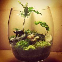 I wonder if I can get tiny plants? Air Plant Terrarium, Succulent Terrarium, Little Gardens, Small Gardens, Moss Garden, Succulents Garden, Mini Plantas, Moss Plant, Most Beautiful Gardens