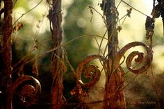 Antique Rusty Wrought Iron Gate Print rust reds mossy greens creamy sky dreamy-Light 11x14 Photographic giclee print