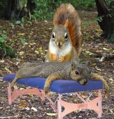 ahhhh, A Little to the Left Please... Squirrels #Squirrels