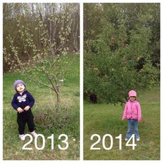 Watch your little one and a family planted tree grow.  Every year around the same time take a pic