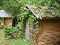 small green roof on a garden shed in Raleigh, North Carolina