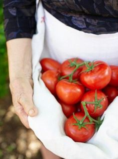 Secrets to Growing Tomatoes in Containers - Urban Gardening Country Life, Country Living, Country Style, Kara Rosenlund, Ham And Eggs, Growing Tomatoes In Containers, Tomato Garden, Vegetable Garden, Down On The Farm