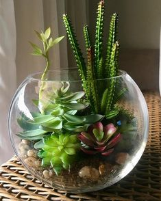 succulents mason jar, succulents centerpiece, succulents indoor, succulents in containers Succulents In Glass, Colorful Succulents, Succulents In Containers, Succulents Diy, Planting Succulents, Indoor Succulents, Indoor Succulent Planter, Succulent Terrarium, Plant In Glass