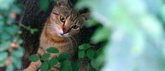 NIK alarmuje: Rośnie liczba bezdomnych psów i kotów - Fakty