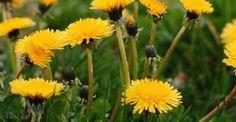 10 erbe selvatiche e piante commestibili che potete raccogliere in inverno