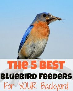 Are you looking for bird feeders that cater to bluebirds in your backyard? This post includes the BEST bluebird feeders that should attract the beautiful birds! Almost all of the feeders can hold mealworms, which is a bluebird favorite! Garden Bird Feeders, Bird House Feeder, Garden Birds, Pretty Birds, Beautiful Birds, Bluebird Nest, Bird House Kits, Blue Bird House, How To Attract Birds