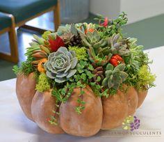 Succulent topped pumpkin. www.idreamofsucculents.com Pumpkin Arrangements, Succulent Arrangements, Pumpkins, Fall, Plants, Projects, Succulents, Porcelain, Autumn