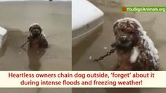 Owners chain dog outside, forget about him during intense fl... - Care2 News Network
