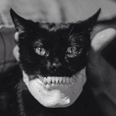 Locuras - Gato - mandíbula inferior .
