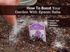 https://scontent-b-sjc.xx.fbcdn.net/hphotos-prn1/1557552_586501524768925_1569983270_n.jpg    How To Boost Your Garden With Epsom Salts - http://plantcaretoday.com/boost-garden-epsom-salts.html