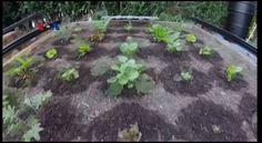 Sebuah perusahaan rintisan di California, AS memperkenalkan robot pertanian yang bisa menanam benih dan merawat kebun rumah tangga. Robot ini sangat berguna bagi keluarga yang ingin berkebun dan menanam sayuran sendiri tapi tidak memiliki waktu untuk hal itu.   Simak di YouTube:  youtube.com/watch?v=qhUGbYM9Mms
