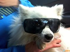 The Cutest Pets on Twitter This Week! - MADE IN THE SHADES - Twitter Pics : People.com