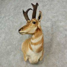 Taxidermy For Sale - The Taxidermy Store has a wide selection of pronghorn antelope mounts & horns, wildlife and outdoor decor products for sale. Taxidermy For Sale, Taxidermy Display, Trophy Hunting, Fox Hunting, House Furniture Design, Chair Design, Design Design, Modern Furniture, Deer Outline