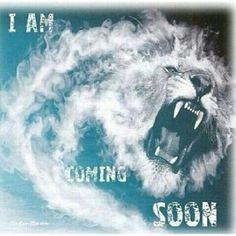 Jesus Returns to Earth at the second coming as 'The Lion Of Judah' to The Battle of Armaggedon. He will not be a lamb this time! Lion And Lamb, Jesus Return, Tribe Of Judah, Prophetic Art, Jesus Is Coming, Lord And Savior, King Of Kings, Way Of Life, Jesus Loves