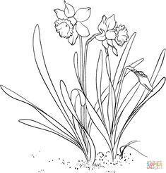 narcissus flower coloring pages: narcissus flower coloring pages Spring Coloring Pages, Flower Coloring Pages, Colouring Pages, Coloring Pages For Kids, Coloring Books, Free Coloring Sheets, Free Printable Coloring Pages, Daffodil Color, Daffodil Flower