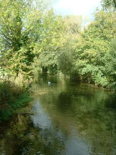 The River Test from Fulling Mill bridge Recommended by http://www.fishinglondon.co.uk/