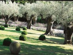 Quand les oliviers rêvent de beaux jours