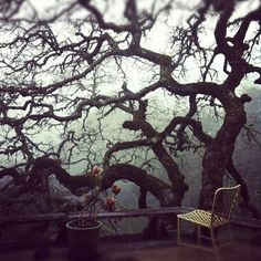 every dream house needs an old tree to contemplate. Morning fog for extra points!