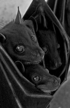 bats... people think they are scary but look at how cute they are!