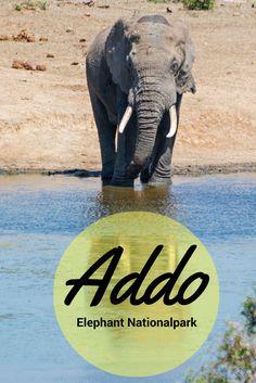 Eine Safari durch den Addo Elephant Nationalpark in Südafrika