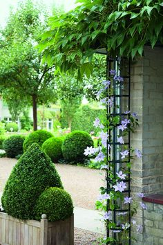 Easy way to cover those unsightly Rain Spout with Trellis + Garden Ideas + Landscape