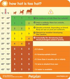 How Hot Is TOO Hot for Your Dog?