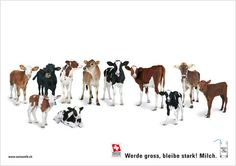 Swiss milk ad - so many servings of veal, says my darling son. :-)