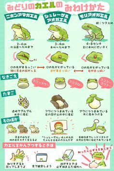 I love frogs Animals And Pets, Funny Animals, Map Diagram, Animals Information, Cute Frogs, Animal Facts, Science For Kids, Animal Drawings, Trivia
