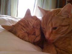 Harry & Teddy RIP
