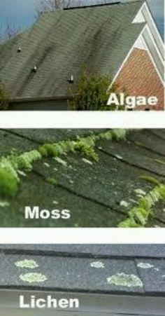 How To Fix A Leaky Roof The Fix Is In Pinterest
