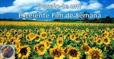 Desejo-te um Excelente Dia :)  Bom Dia e Bom Fim de Semana!  #bomdia #atreveteaserlivre #escolheserfeliz